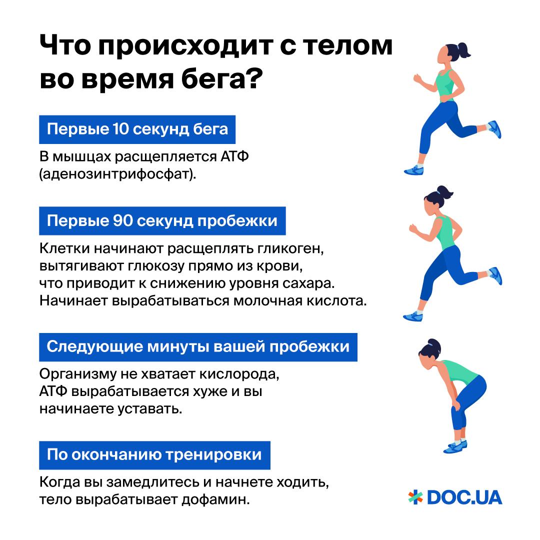что происходит с телом во время бега?