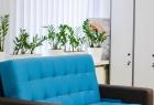 Центр Подологии Steffany в Житомире. Онлайн запись в клинику на сайте Doc.ua (041) 255 37 07